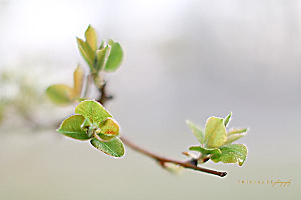 springfloral15