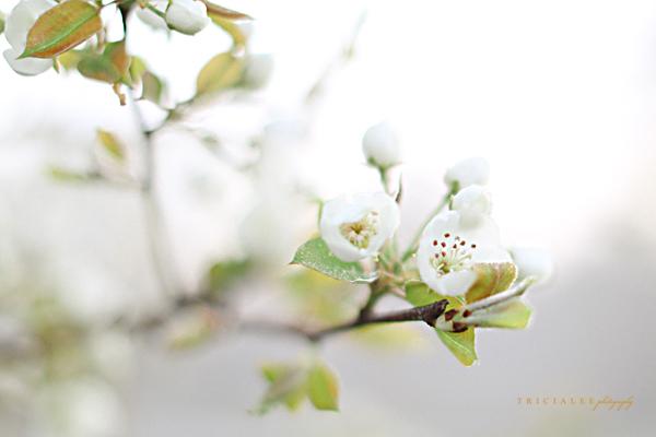 springfloral151