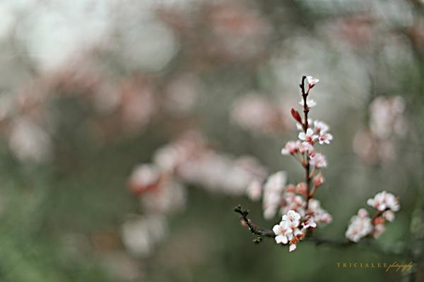 springfloral152